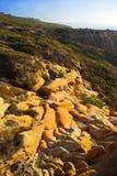 Torrey Pines. Photo of the beautiful Torrey Pines - California Royalty Free Stock Photo