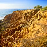 Torrey Pines Royalty Free Stock Photo