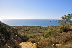 Torrey Pines State Natural Reserve and Beach Stock Images