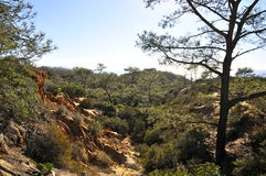 Torrey Pines State Natural Reserve e praia foto de stock
