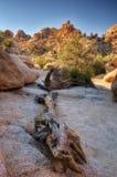 Torrey Pines State Park EUA imagens de stock royalty free