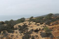 Torrey Pines State Park Royalty Free Stock Photography