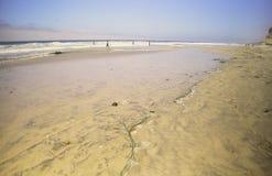 Torrey sosen stanu parka plaża, Kalifornia Zdjęcia Royalty Free