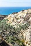 Torrey sosen stanu plaża w San Diego i rezerwa, Kalifornia zdjęcia stock