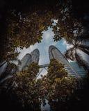 Torri di Petronas dalla giungla fotografia stock