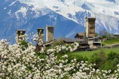 Torri di Svanetian nel fiore di primavera Fotografie Stock Libere da Diritti