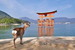 Torri Gate di galleggiamento famosa nell'isola di Miyajima, Giappone Fotografie Stock Libere da Diritti