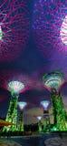 Torri illuminate variopinte dei giardini dalla baia a Singapore Fotografia Stock Libera da Diritti