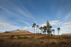Torridon trees Stock Images