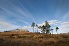 Torridon trees Stock Images