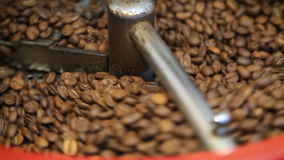 Torrificador de café que refrigera fora os feijões de café roasted frescos que refrigeram feijões de café após a repreensão na má vídeos de arquivo