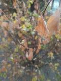 Torrt blad av trädet arkivbild