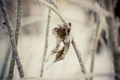 Torrt blad i snön Royaltyfri Foto