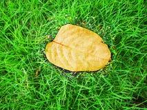 Torrt blad på bakgrund för grönt gräs, naturtextur royaltyfria bilder