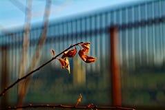 Torrt blad på en filial Arkivfoto