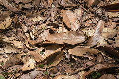 Torrt blad på golvet Royaltyfria Bilder