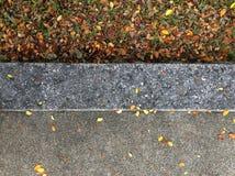 Torrt blad på jordningen Arkivbilder