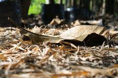 Torrt blad på jordningen i höstskog Arkivfoton