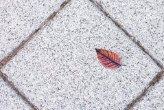 Torrt blad på Tiled golvet royaltyfri bild
