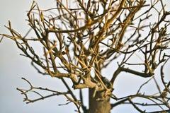 Torrt bonsaiträd Royaltyfria Foton