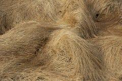 Torrt gräs Royaltyfria Bilder