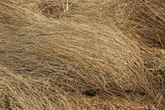 Torrt gräs Royaltyfri Fotografi