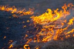 Torrt gräs för brandbrännskada en äng Arkivbild