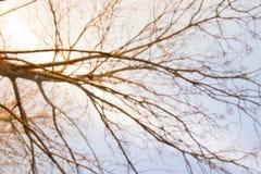 Torrt gräs för höstbakgrundssuddighet Arkivbild