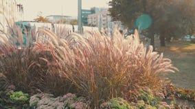 Torrt gräs för ultrarapid i stad lager videofilmer