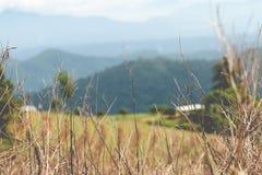 Torrt gräs i bergen Fotografering för Bildbyråer