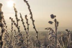 Torrt gräs i frost, i panelljuset av solen arkivbild