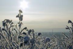 Torrt gräs i frost, i panelljuset av solen royaltyfria bilder
