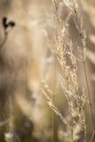 Torrt gräs i höst Arkivbild