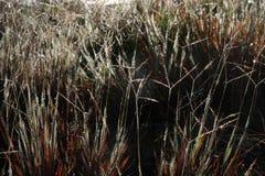 Torrt gräs i morgonen Royaltyfria Bilder