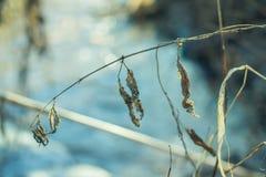 Torrt gräs i tidig vår på en solig dag arkivfoto