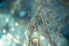 Torrt gräs i tidig vår på en solig dag arkivbild