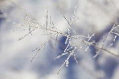 Torrt gräs med is Royaltyfria Bilder