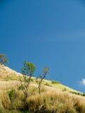 Torrt gräs och blå himmel i sommar Arkivbild