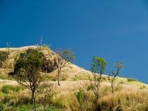 Torrt gräs och blå himmel i sommar Fotografering för Bildbyråer