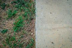 Torrt gräs och cement Arkivfoto