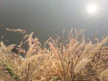 Torrt gräs och vatten Royaltyfria Bilder