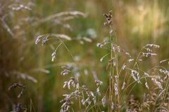 Torrt gräs på bakgrundsgräsplanen Royaltyfria Bilder