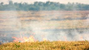 Torrt gräs på brand lager videofilmer