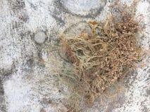 Torrt gräs på cementgolv royaltyfri fotografi