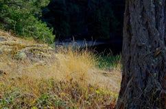 Torrt gräs på en bluff som förbiser en skuggad liten vik Arkivfoton