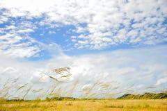 Torrt gräs på fält Arkivfoto