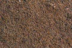 Torrt gräs på jordningen Arkivbild