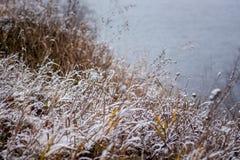 Torrt gräs som täckas med snö, på banken av river_en arkivbild