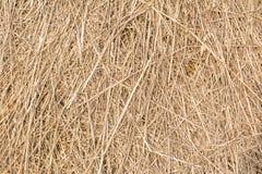 Torrt gräs staplas, höstacknärbilden, textur, abstrakt begrepp Royaltyfri Bild