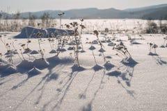 Torrt gräs ut från under snön mot bakgrunden av bergen, under gryningen Arkivfoto